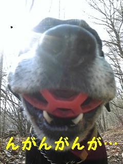 労働・散歩・薪スト、、、_f0148927_2238556.jpg