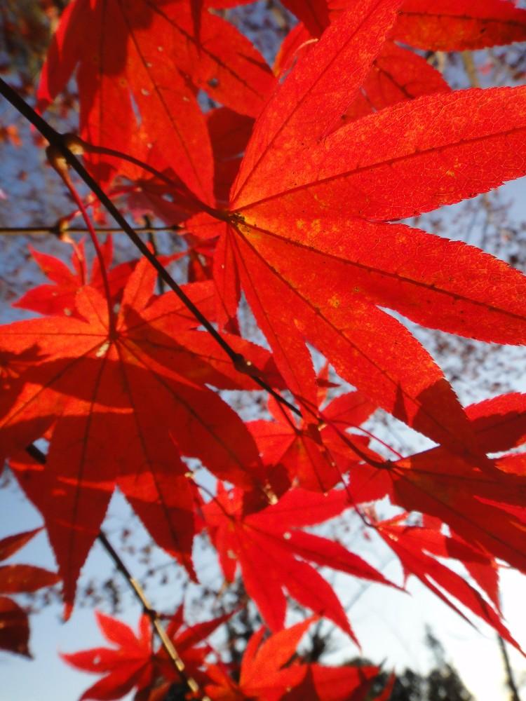 紅葉終盤_c0111229_18364935.jpg