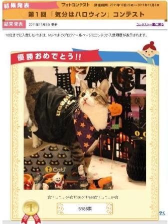 Yahoo!ペット第1回「気分はハロウィン」フォトコンテスト第1位第2位猫。_a0143140_23245883.jpg