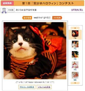 Yahoo!ペット第1回「気分はハロウィン」フォトコンテスト第1位第2位猫。_a0143140_23253985.jpg