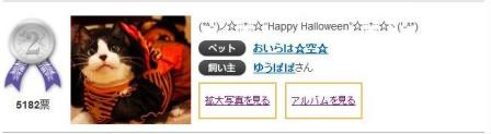 Yahoo!ペット第1回「気分はハロウィン」フォトコンテスト第1位第2位猫。_a0143140_23321964.jpg
