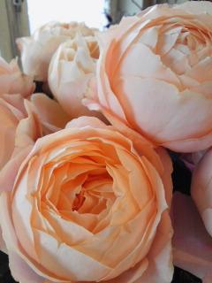 可愛すぎるバラたち_a0229658_13465126.jpg