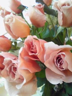 可愛すぎるバラたち_a0229658_13584627.jpg