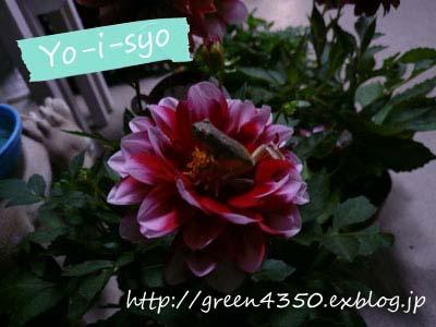 b0232773_21292232.jpg
