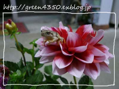 b0232773_21301145.jpg