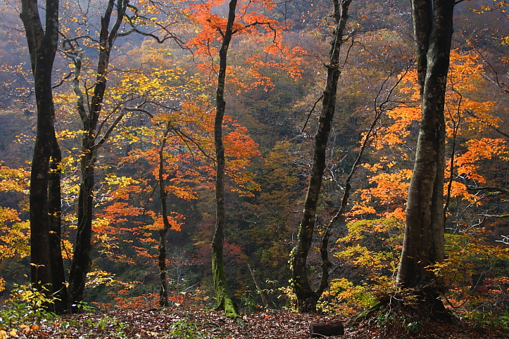 新潟 胎内渓谷の紅葉 その3_e0165983_1034599.jpg