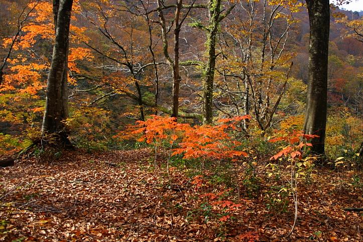 新潟 胎内渓谷の紅葉 その3_e0165983_10393528.jpg