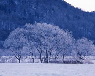 立冬が過ぎ_f0118184_16463066.jpg