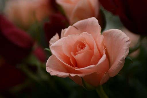 素晴らしい薔薇_c0149987_10105797.jpg