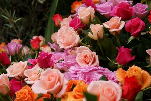 素晴らしい薔薇_c0149987_1012356.jpg