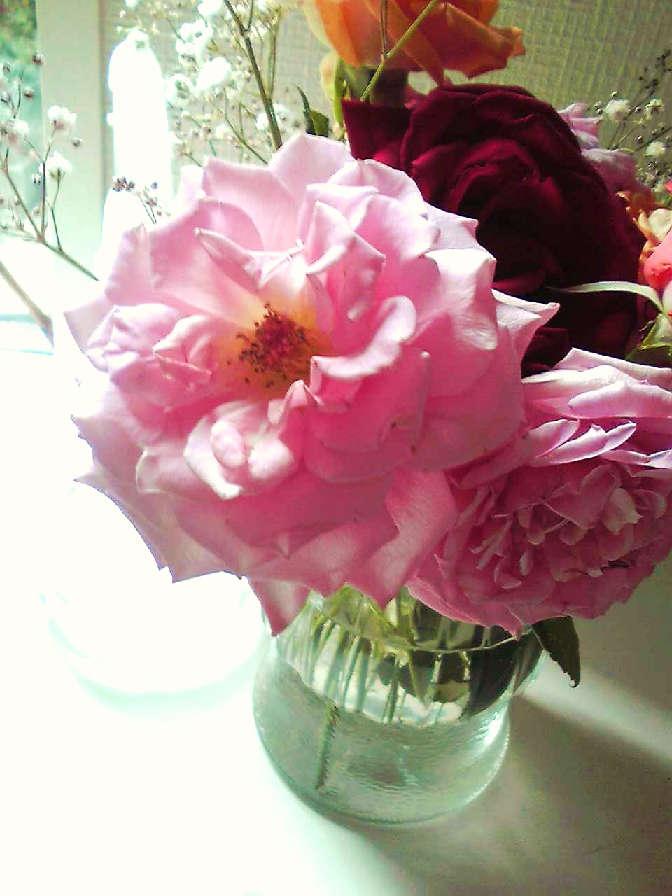 素晴らしい薔薇_c0149987_1085782.jpg