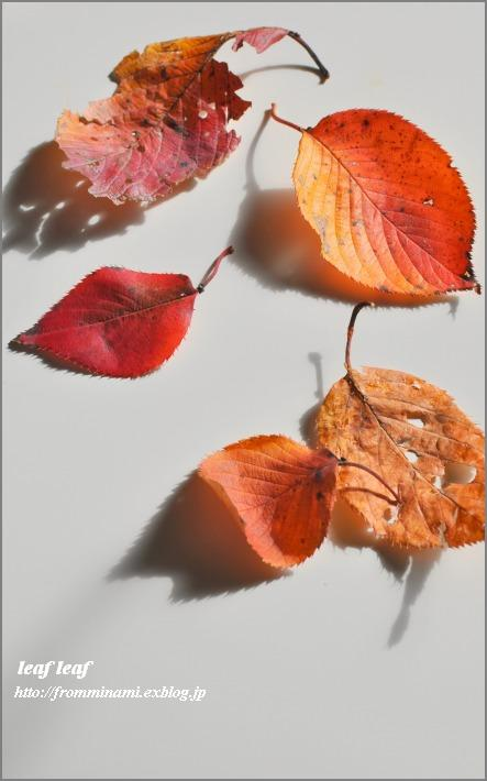 leaf leaf_e0184300_22241998.jpg