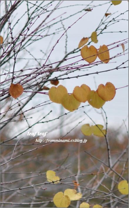 leaf leaf_e0184300_22563538.jpg