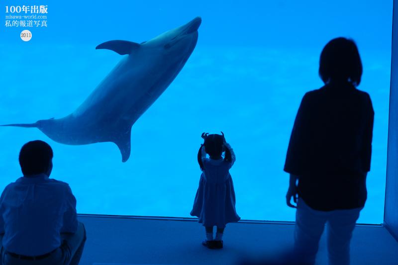 9/25 家族写真の出張撮影  【 名古屋港水族館 】 _a0120304_3241411.jpg