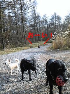 お散歩拒否_f0148927_22264511.jpg