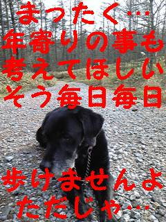 お散歩拒否_f0148927_22283568.jpg