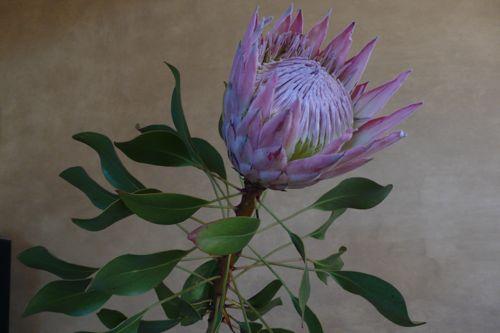 花に癒されて、、、_b0182969_22315328.jpg