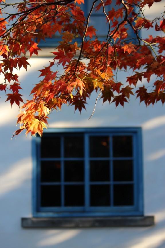 10月の別の顔色の写真たち_a0158797_832343.jpg
