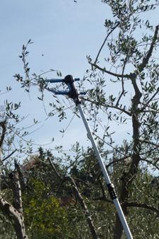 オリーブの収穫方法_f0106597_1849115.jpg