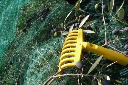 オリーブの収穫方法_f0106597_1850361.jpg