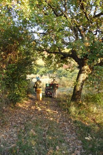オリーブの収穫方法_f0106597_18562441.jpg