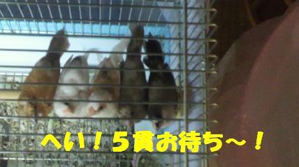 b0206300_1852585.jpg