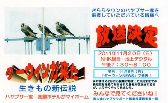 泉大津のハヤブサが放映される_c0047906_10502381.jpg
