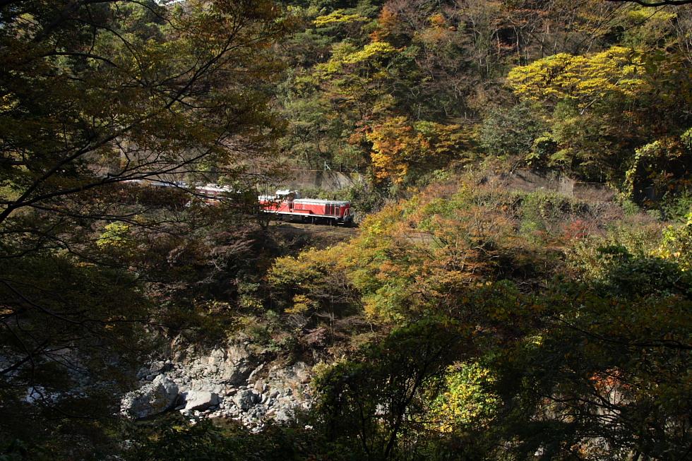 紅葉と赤い機関車 - 2011年秋・わたらせ -_b0190710_2228125.jpg