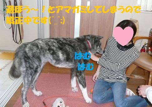 f0121712_1625869.jpg