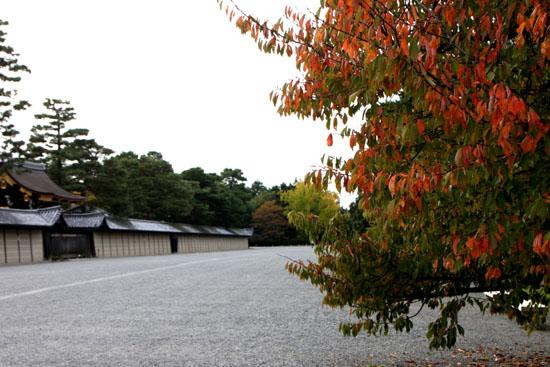 京都御苑 紅葉のさきがけ_e0048413_10222298.jpg
