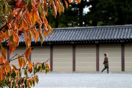 京都御苑 紅葉のさきがけ_e0048413_1022323.jpg