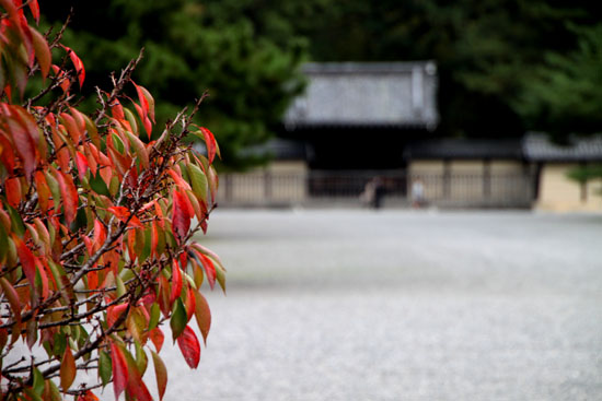 京都御苑 紅葉のさきがけ_e0048413_10224351.jpg