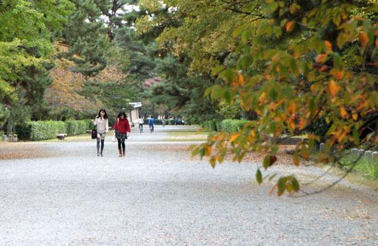 京都御苑 紅葉のさきがけ_e0048413_1022499.jpg