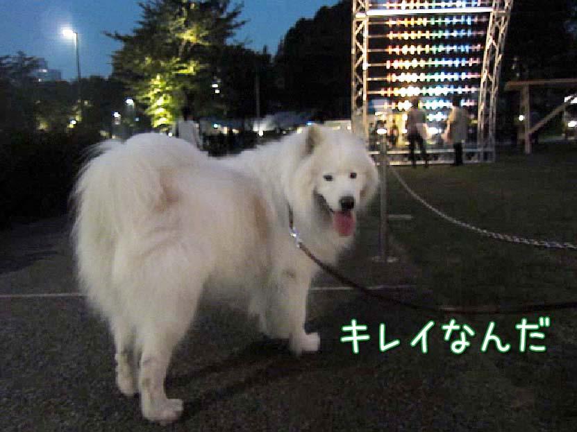 先週末のお散歩_c0062832_6451351.jpg