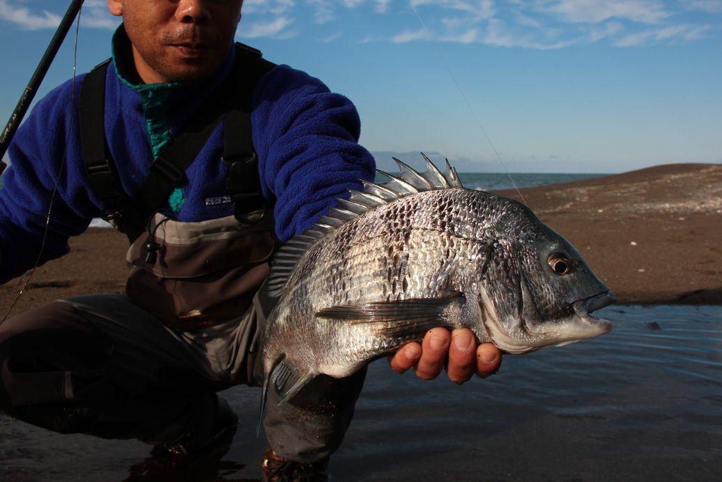 日本海・・・波・時々ナブラ_e0150433_189570.jpg