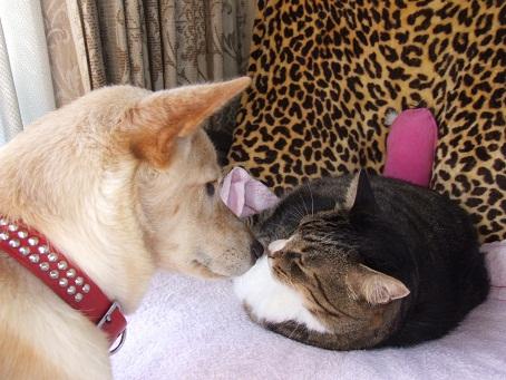 犬に愛される猫。。。_b0089338_126373.jpg