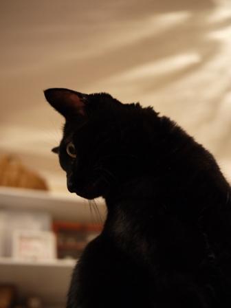 そびえたつ猫 のぇる編。_a0143140_23132257.jpg