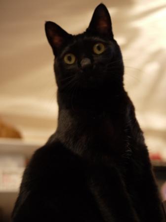 そびえたつ猫 のぇる編。_a0143140_2313398.jpg