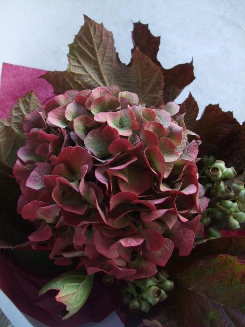 オークリーフ(赤い紫陽花をお誕生日に束ねて・・・)_f0049672_1412992.jpg