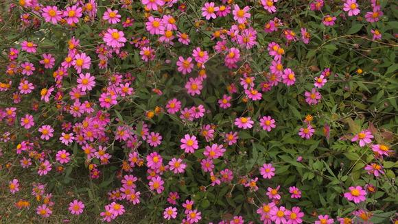 海の中道海浜公園_b0214473_19572840.jpg