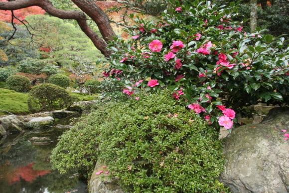 坂本の紅葉6 旧竹林院_c0196076_0364229.jpg