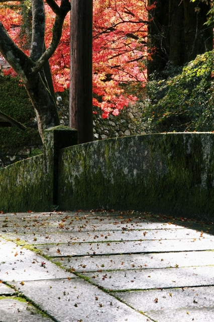 坂本の紅葉1 日吉大社_c0196076_1352479.jpg