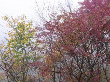 霧の中の紅葉_d0169179_17222318.jpg