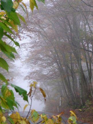 霧の中の紅葉_d0169179_17363611.jpg