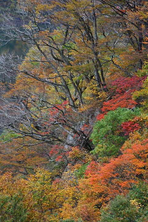 新潟 胎内渓谷の紅葉 その4_e0165983_1037762.jpg