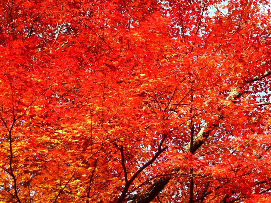 「紅葉」_f0150893_12291923.jpg