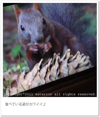 b0142197_1527572.jpg