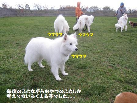 f0212597_642215.jpg