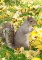 紅葉のニューヨーク、野生のリスくんたちは大忙し_b0007805_9202244.jpg