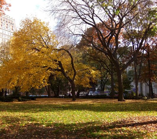 紅葉のニューヨーク、野生のリスくんたちは大忙し_b0007805_920573.jpg